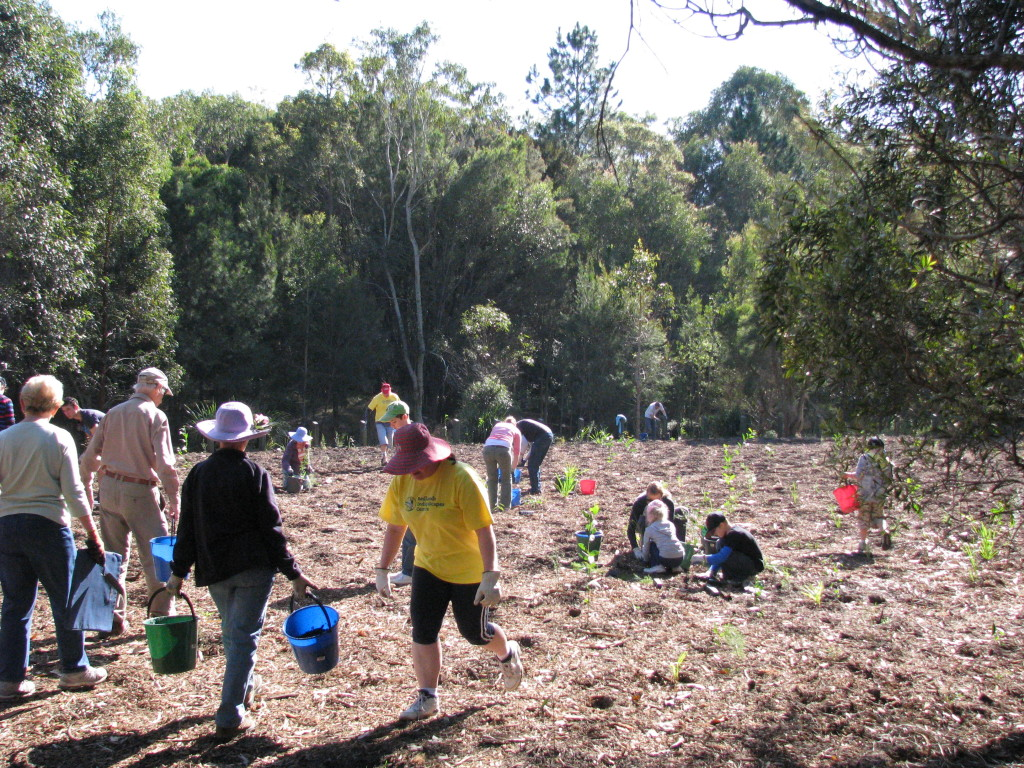 An example of community and council working together planting along Eprapah Creek, Victoria Point as part of National Tree Day last year.