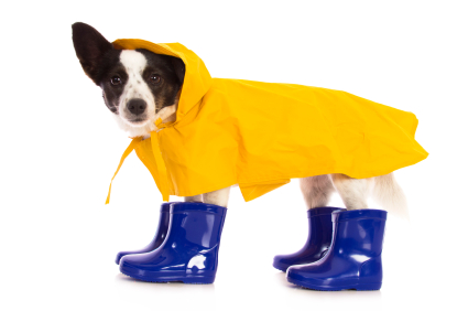 26445679 winter puppy raincoat