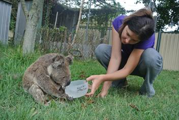 Wildcare Straddie's Dr Romane Cristescu provides Ziggy with fresh water. Photo: Wildcare Straddie